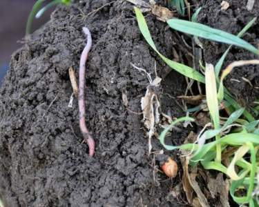 EVENT: Making the most of your soils. An interactive workshop on Soil Health
