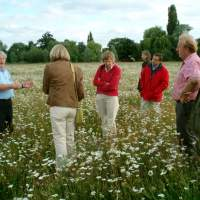 Meadow re-creation project at Dovecote Farm, Upper Heyford - 03
