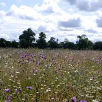 Meadow re-creation project at Dovecote Farm, Upper Heyford - 07