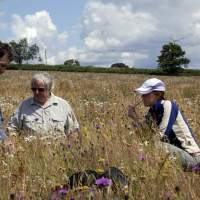 Meadow re-creation project at Dovecote Farm, Upper Heyford - 10