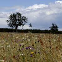 Meadow re-creation project at Dovecote Farm, Upper Heyford - 11